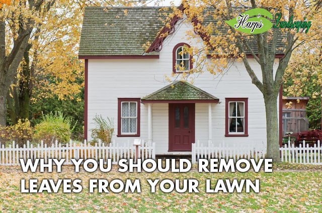 Remove Leaves from Your Lawn