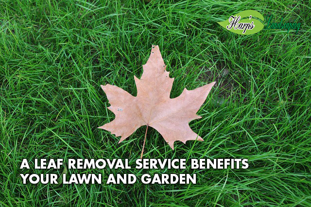 lawn leaf removal